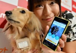 Petfit Tag: a nova coleira digital para animais de estimação