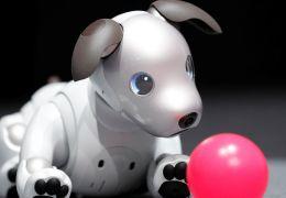 Cachorro-robô da Sony começa a ser vendido em setembro nos EUA
